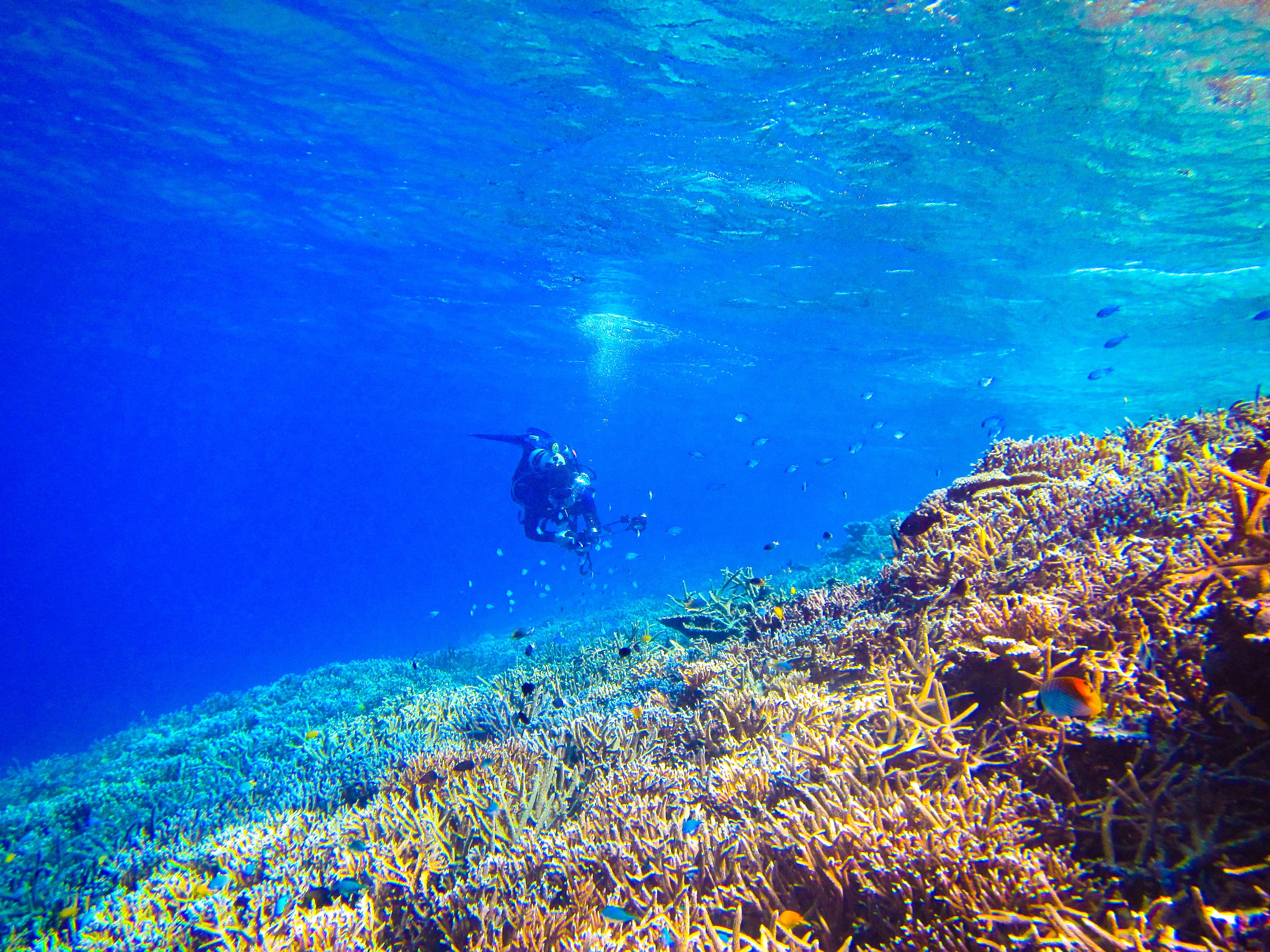 体験ダイビングコース参加の旅行客