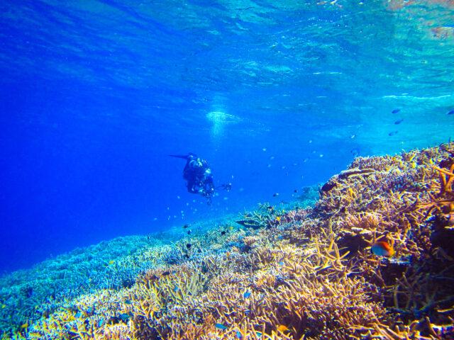 6月の透明度の高い海でシュノーケリング