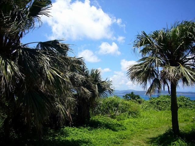 鳩間島で一番の高台である鳩間中森