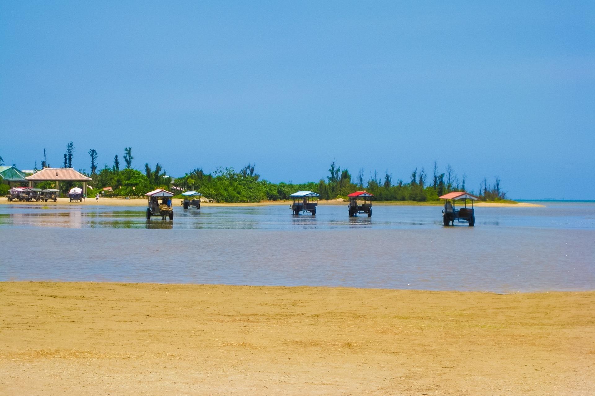 水牛車で1月の由布島水牛車観光