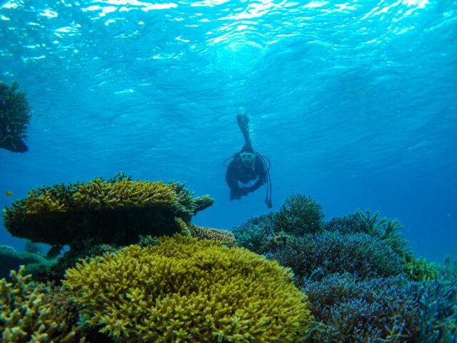 石垣島体験ダイビングでテーブルサンゴと触れ合う
