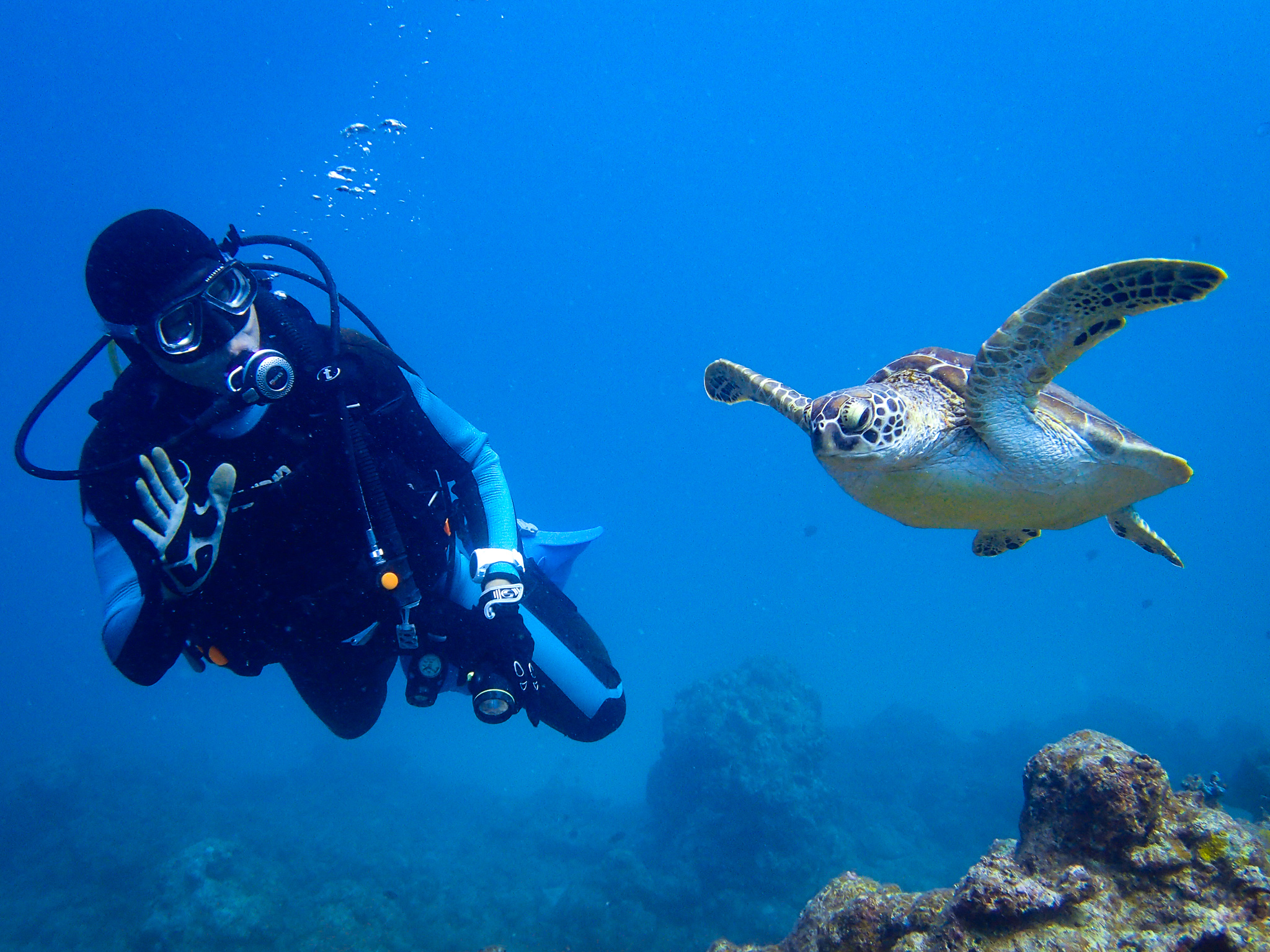 石垣島で7月に有名なウミガメダイビング