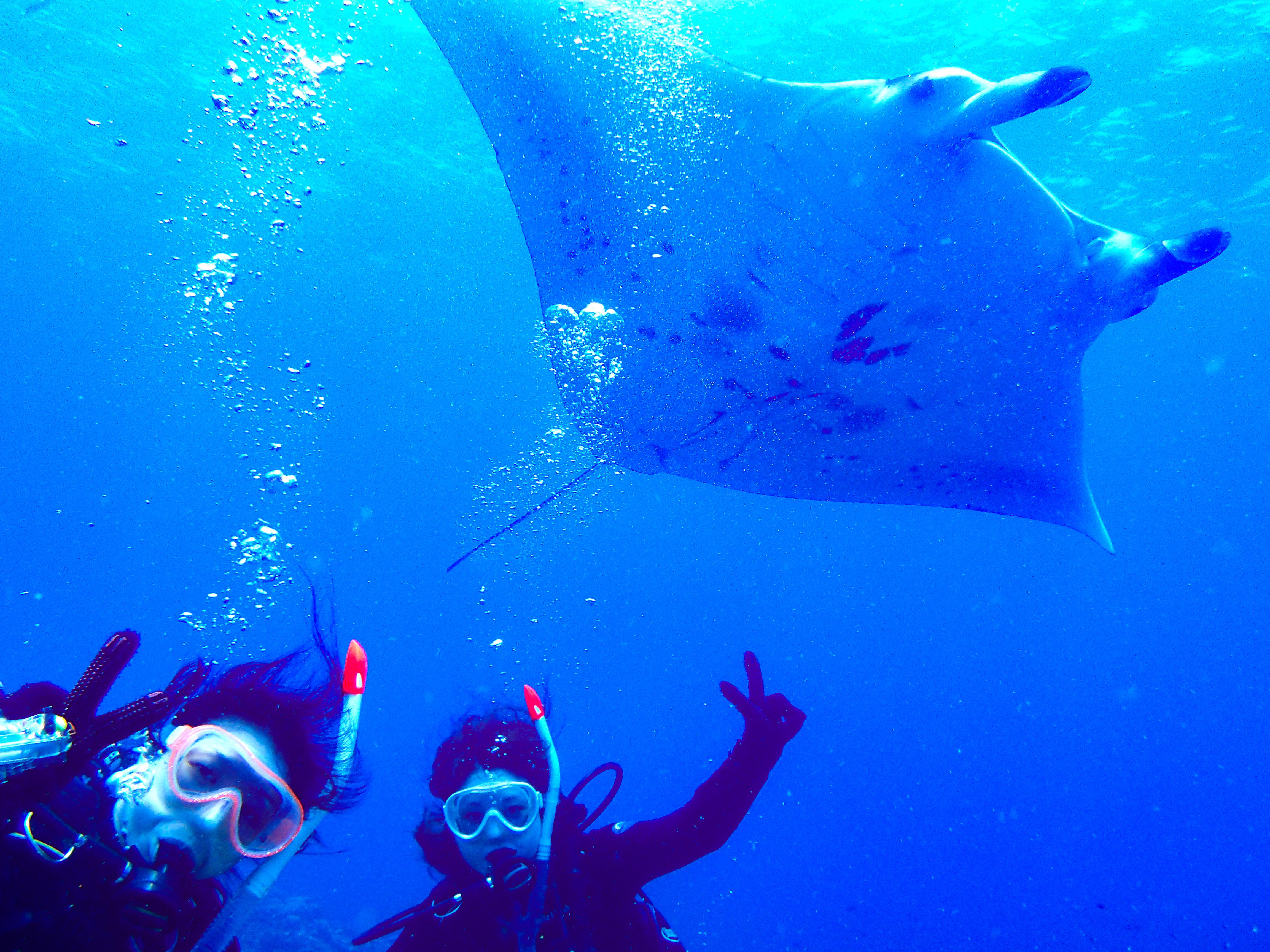 体験ダイビングでマンタを鑑賞する女性