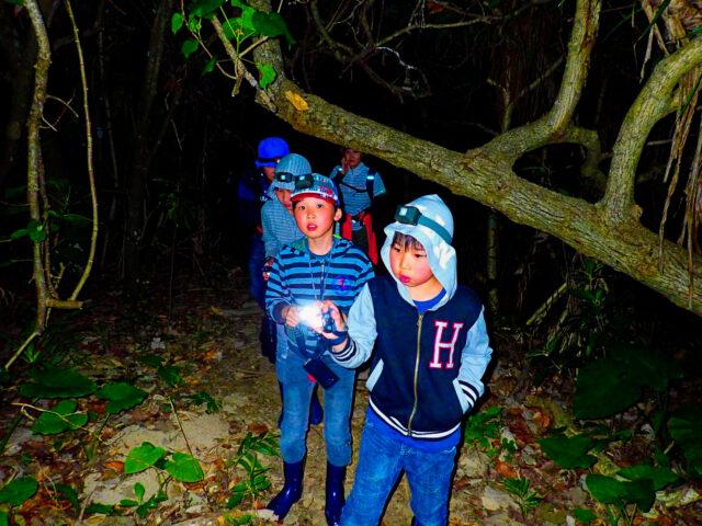 8月の亜熱帯ジャングルナイトツアー