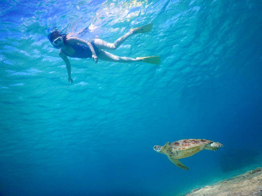 黒島でウミガメシュノーケリングを満喫