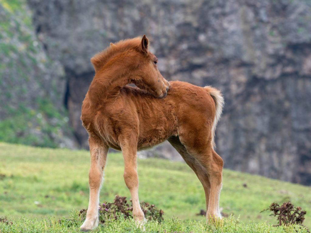 ヨナグニウマ乗馬体験