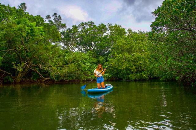 冬でも楽しめる宮良川マングローブSUPをする女性