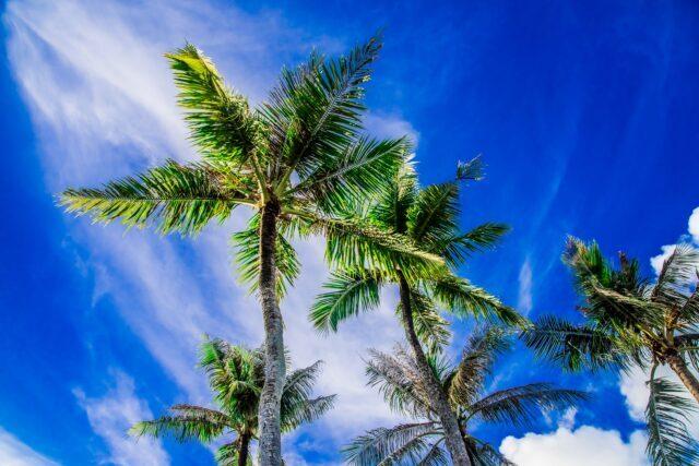 6月の青空とヤシの木