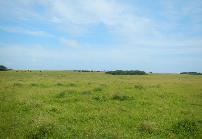 のんびりとした雰囲気のパナリ牧場