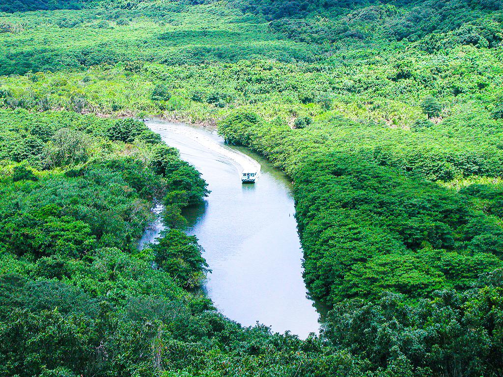 日本最大級のマングローブ川である仲間川