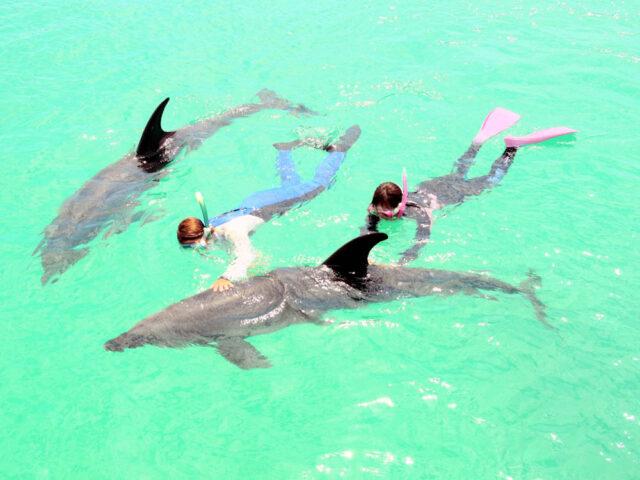 半日ドルフィンスイムで一緒にイルカと泳ぐ