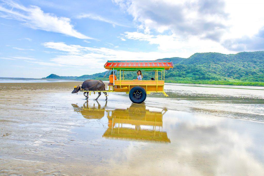 西表島から水牛車に乗って由布島へ向かう