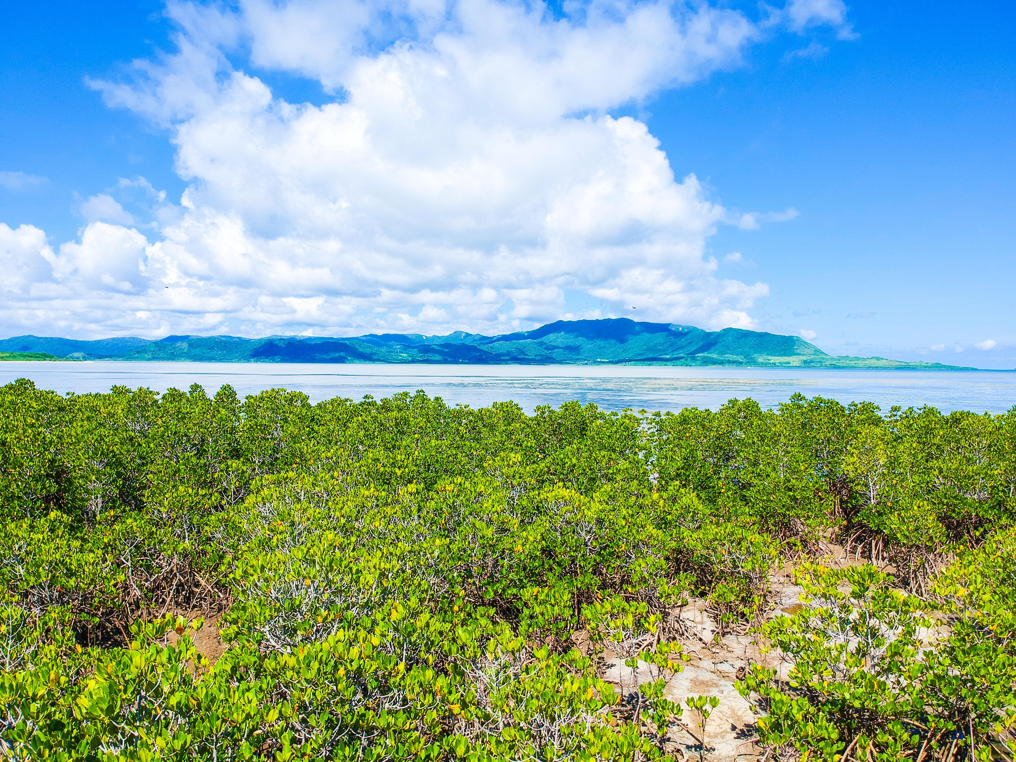 マングローブから見た小浜島の1月の風景
