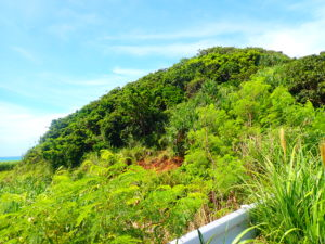 オヤケアカハチの森
