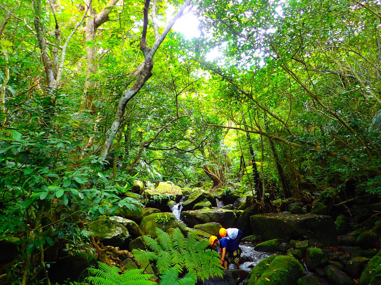 ジャングル探検アクティビティ