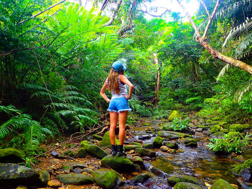 西表島のマングローブジャングルを旅する女性