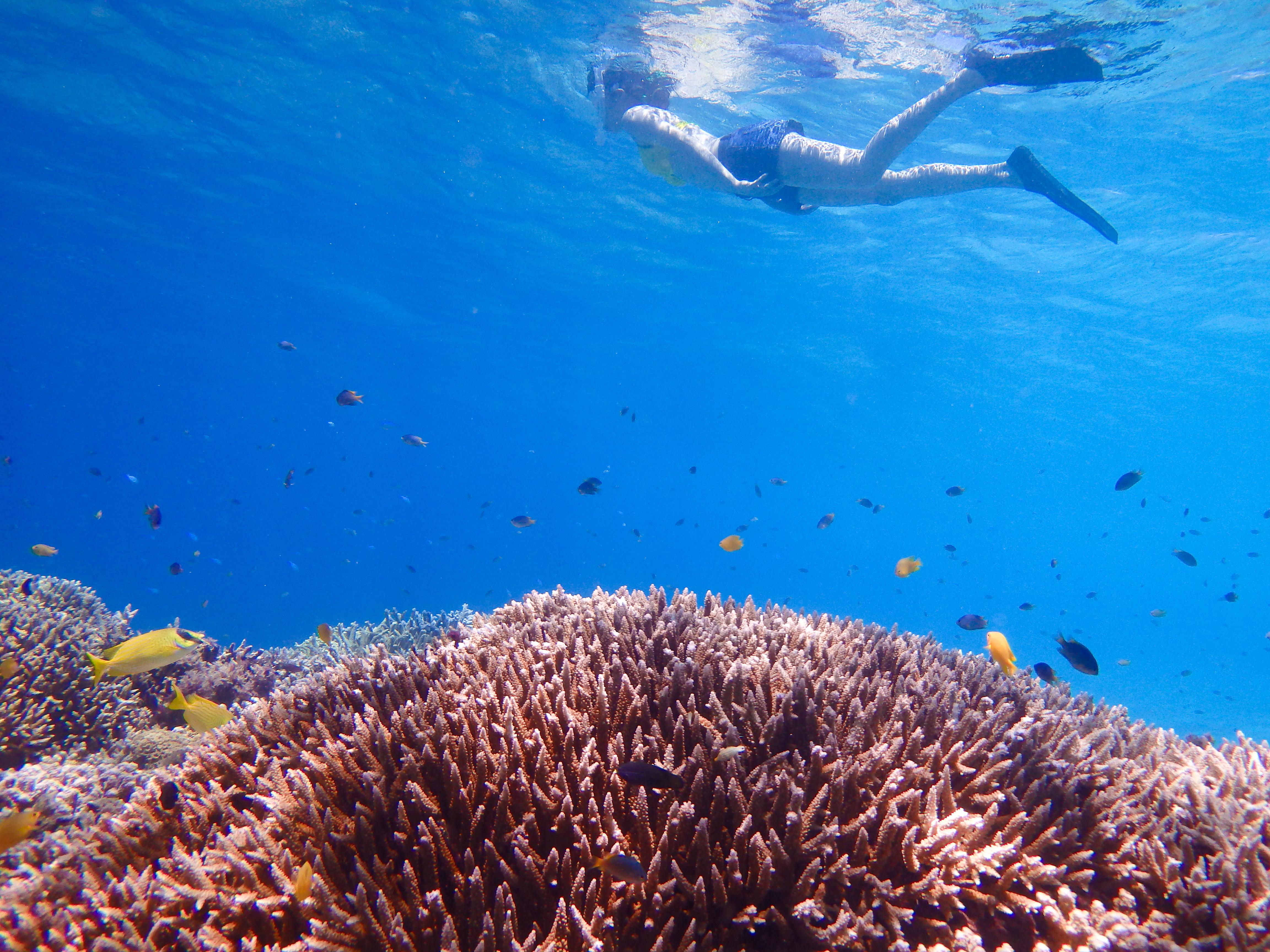 竹富島周辺の石西礁湖にてシュノーケリング