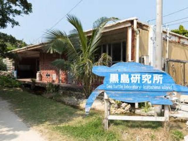 ウミガメを研究している黒島研究所