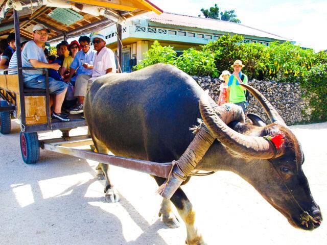 竹富島観光ツアーを体験する家族
