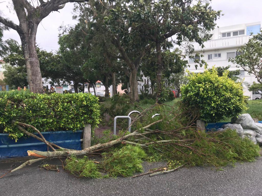台風で倒された木々