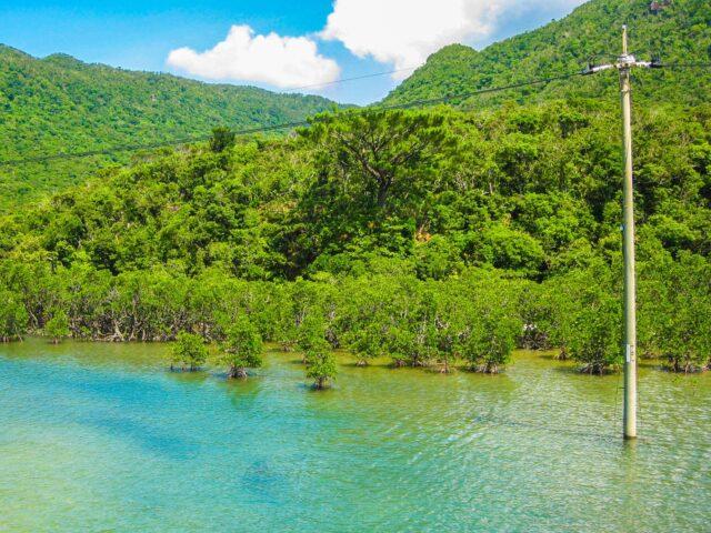 1月の西表島の風景