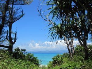ジャングルから見える青い海