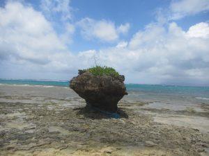 干潮時のノッチ岩の風景