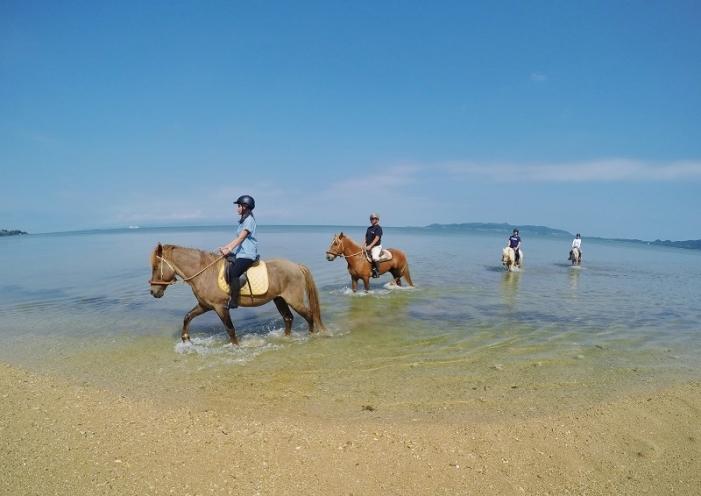 平久保崎周辺で乗馬体験