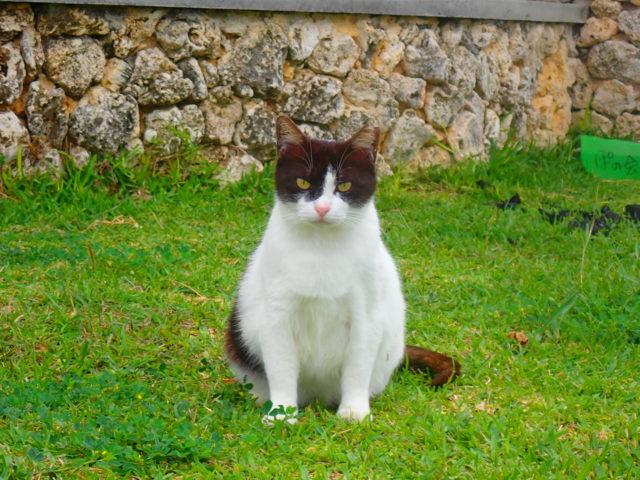 サザンゲート広場の猫