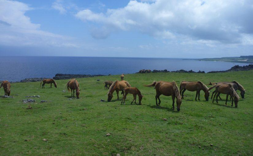与那国島の北牧場