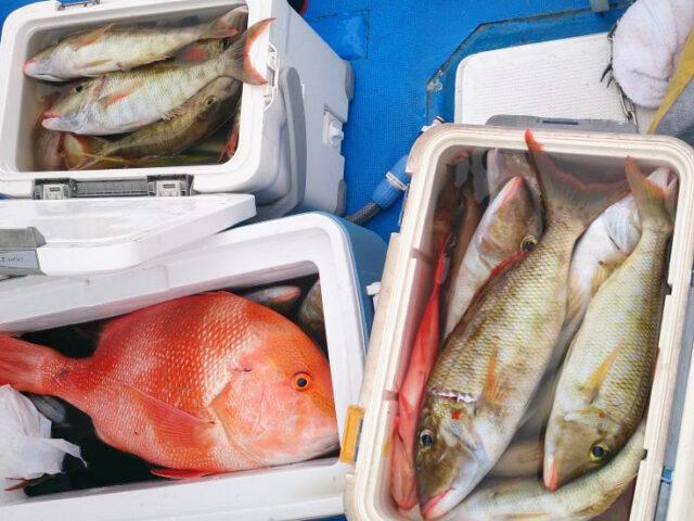 【石垣島・海釣り】チャーター便で大物チャレンジコースで釣り体験!(No.499)