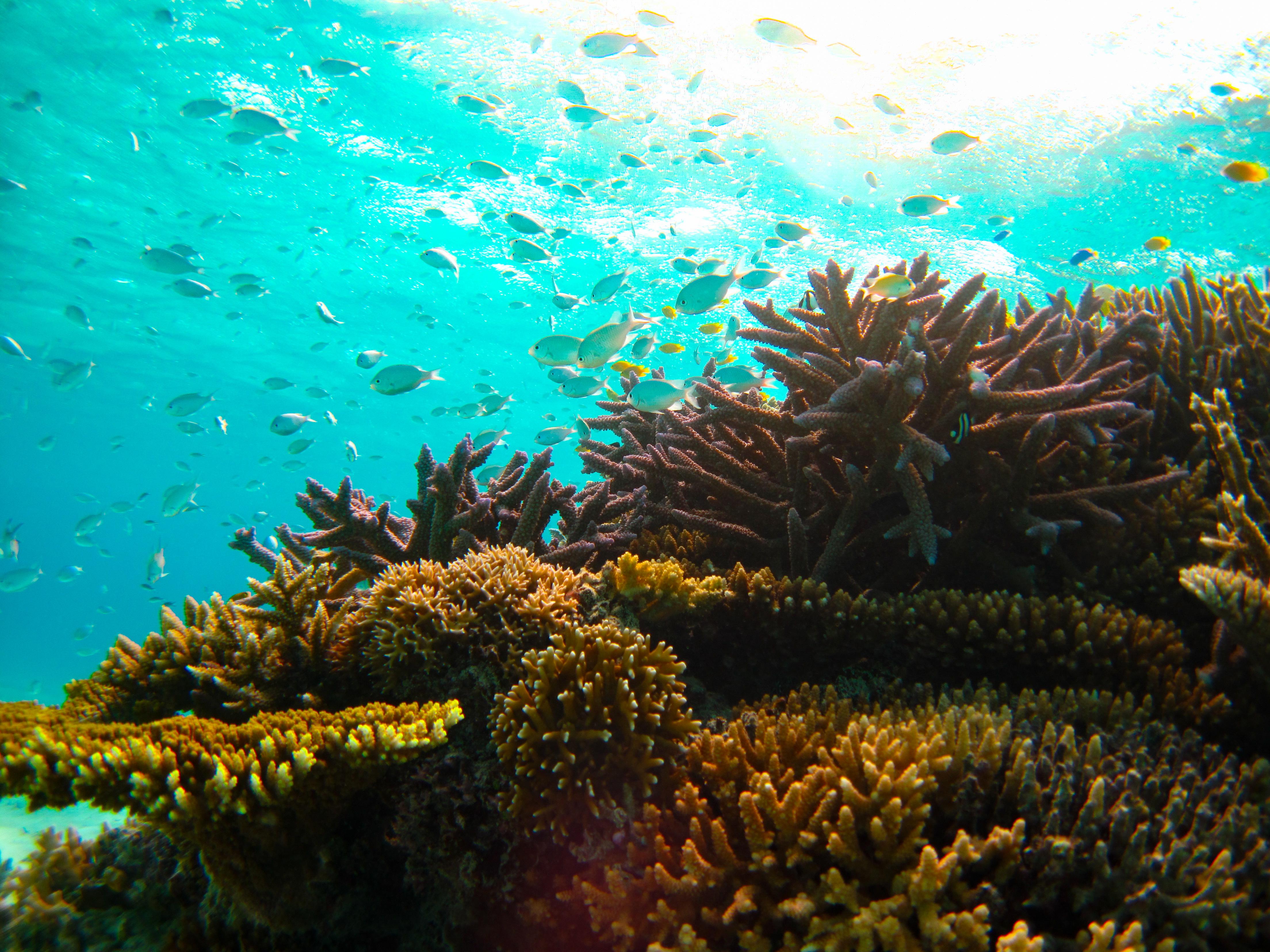 サンゴ周辺の熱帯魚