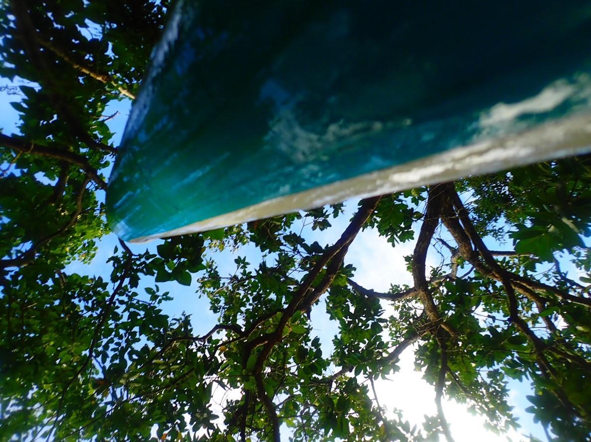 石垣島の秋のヤエヤマヤシの木
