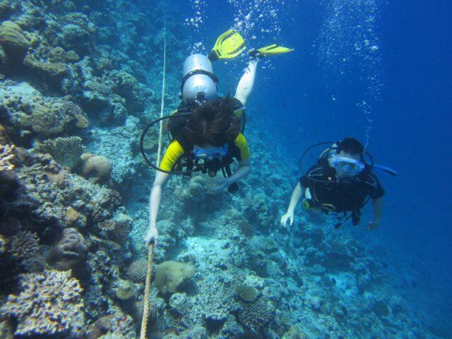 カラフルサンゴに包まれた体験ダイビング