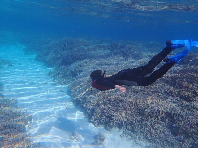 石西礁湖のシュノーケリング