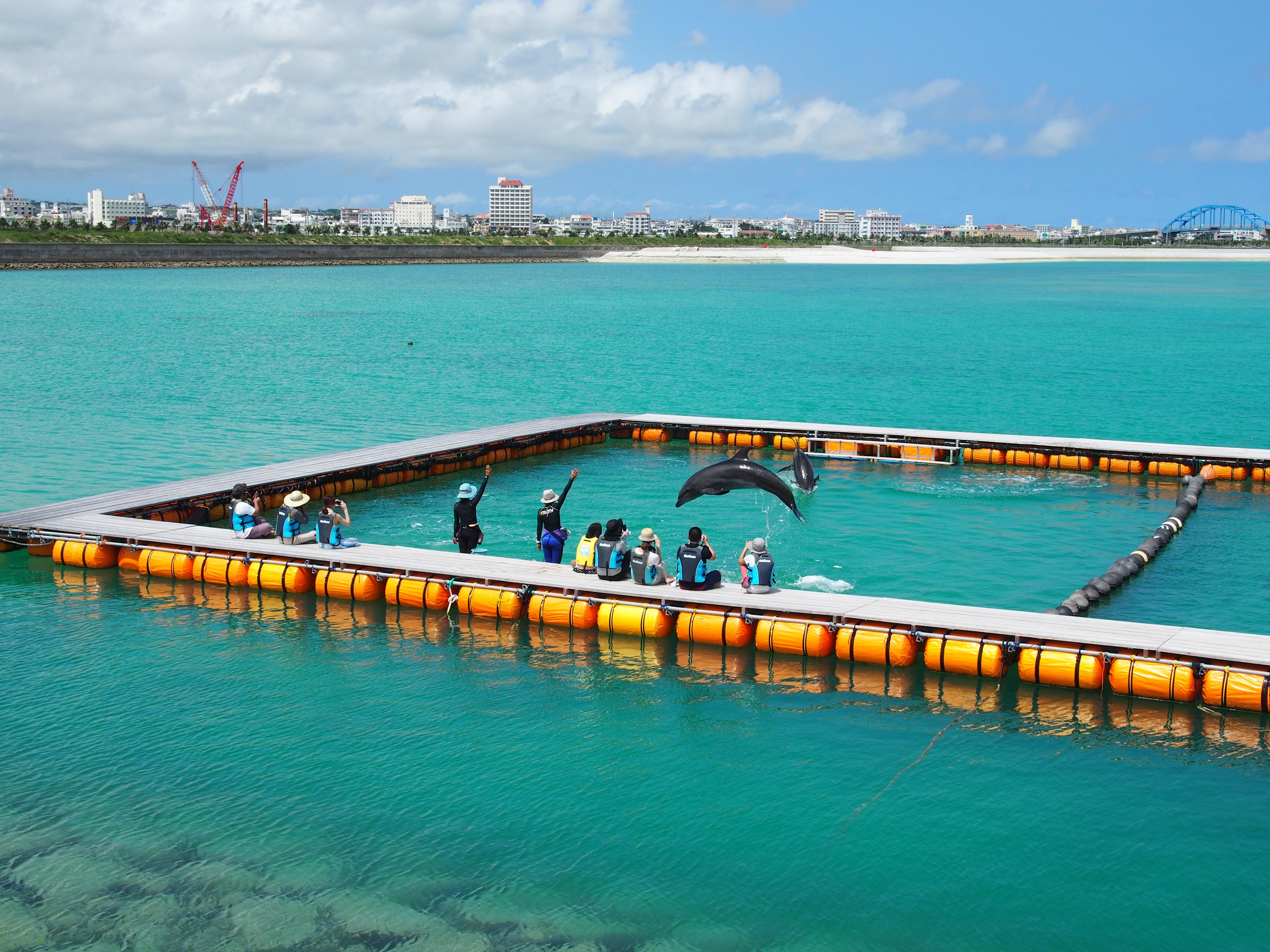 イルカがみどころの人工ビーチ