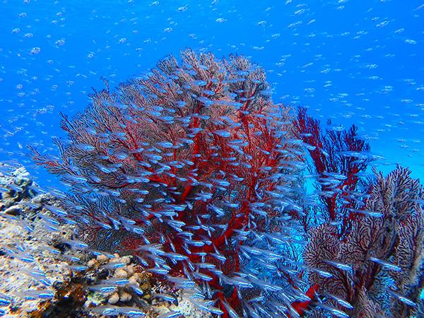 カラフル熱帯魚の群れ