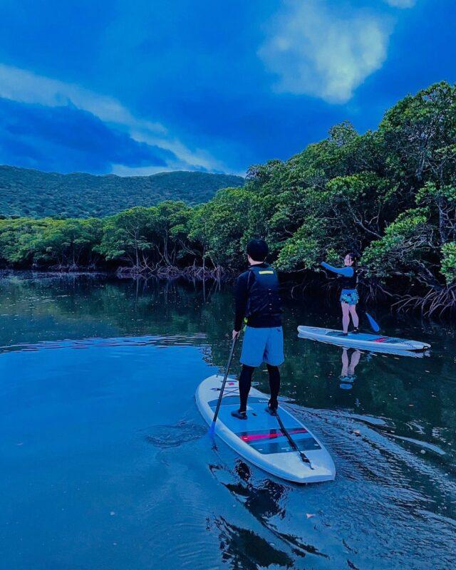 石垣島のマングローブでSUPを楽しむ2人