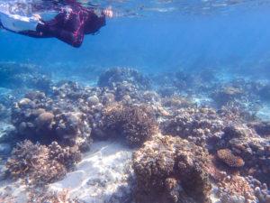 幻の島近くの海でシュノーケリング体験
