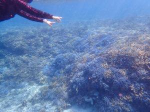 石垣島の海でサンゴを見ながらシュノーケリング体験