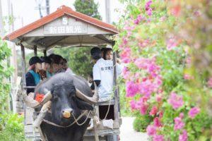 竹富島で水牛車に乗って観光
