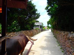 水牛車から見た竹富島の集落の風景
