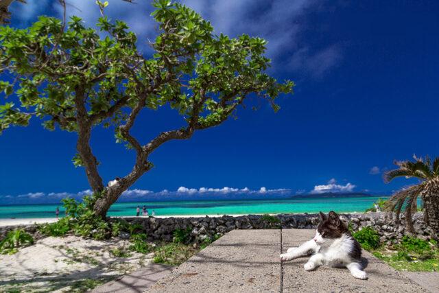 八重山諸島の海辺でくつろぐ猫