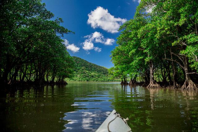西表島 カヌー目線のマングローブ河川