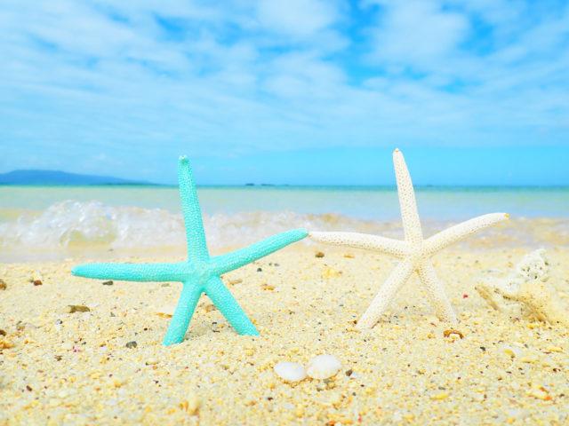 砂浜の星のサンゴ