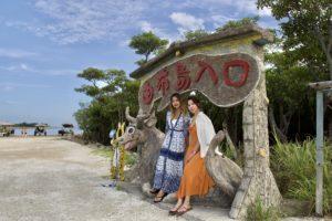 石垣島の水牛