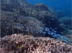 西表島のサンゴ礁