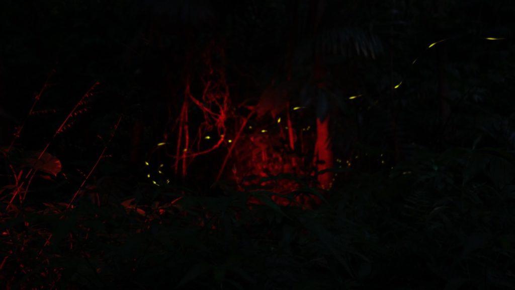 石垣島のホタル