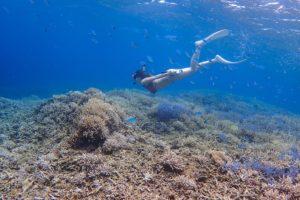 石垣島のサンゴ礁でシュノーケリング