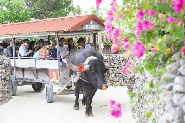 竹富島の水牛車観光
